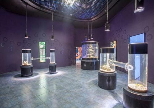 photo by the primorsky aquarium, vladivostok